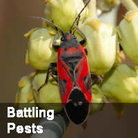 Battling Pest