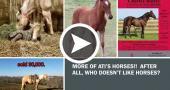 Ohio State ATI Horse Programs Overview